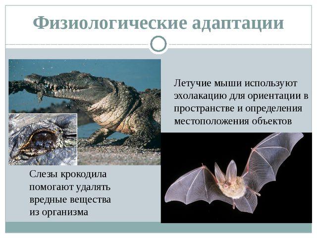 Физиологические адаптации Слезы крокодила помогают удалять вредные вещества и...