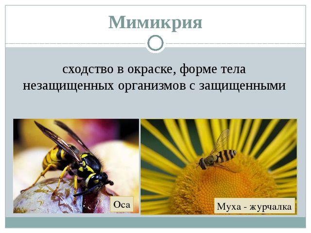 Мимикрия сходство в окраске, форме тела незащищенных организмов с защищенными...