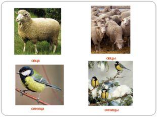 овца овцы синица синицы