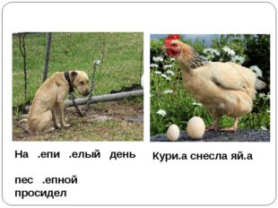 На .епи .елый день пес .епной просидел Кури.а снесла яй.а