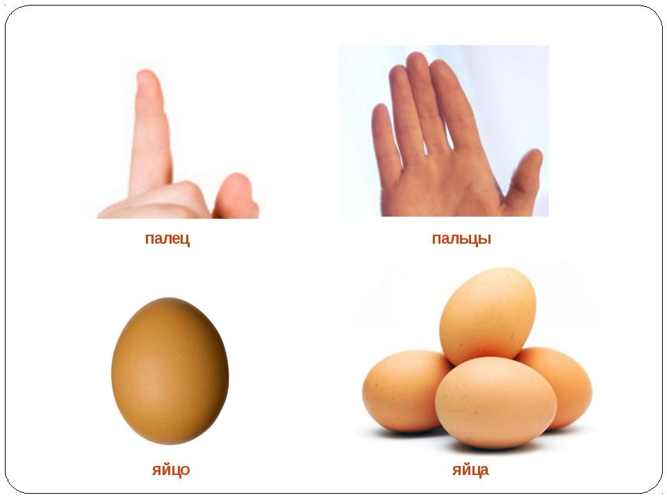палец пальцы яйцо яйца