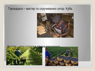 Торседорос – мастер по скручиванию сигар. Куба. Энолог – специалист в сфере