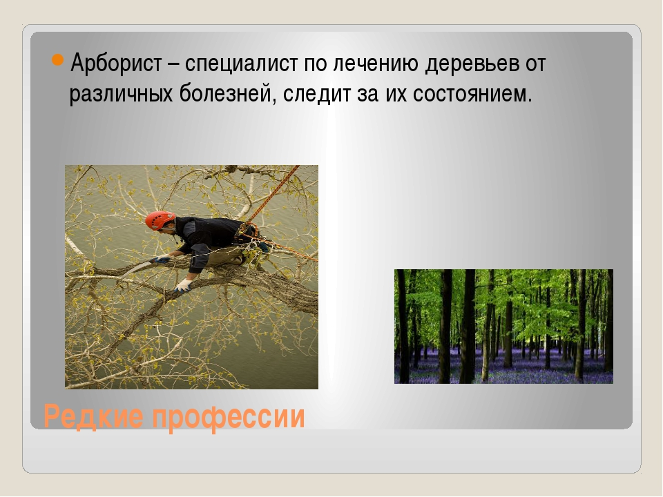 Редкие профессии Арборист – специалист по лечению деревьев от различных болез...