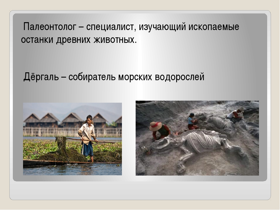 Палеонтолог – специалист, изучающий ископаемые останки древних животных. Дёр...