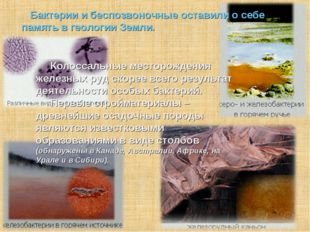 Бактерии и беспозвоночные оставили о себе память в геологии Земли. Колоссал