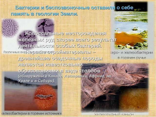 Бактерии и беспозвоночные оставили о себе память в геологии Земли. Колоссал...