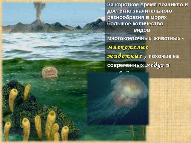 За короткое время возникло и достигло значительного разнообразия в морях боль...
