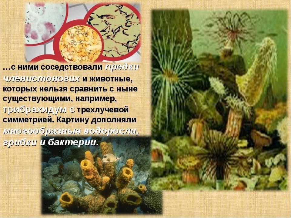…с ними соседствовали предки членистоногих и животные, которых нельзя сравнит...