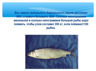 Вес самого маленького байкальского омуля достигает 300г, а самого большого 50
