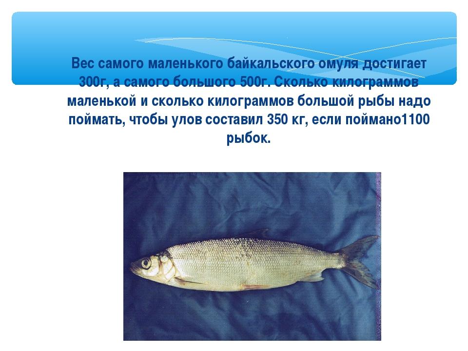 Вес самого маленького байкальского омуля достигает 300г, а самого большого 50...