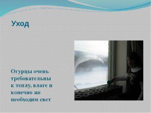 Уход Огурцы очень требовательны к теплу, влаге и конечно же необходим свет