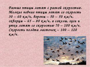 Разные птицы летят с разной скоростью. Мелкие певчие птицы летят со скорость
