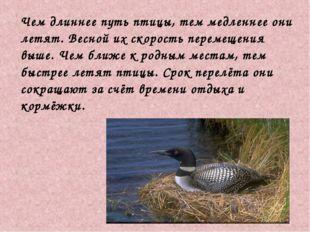 Чем длиннее путь птицы, тем медленнее они летят. Весной их скорость перемеще
