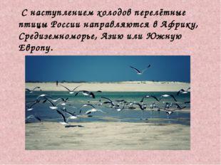С наступлением холодов перелётные птицы России направляются в Африку, Средиз