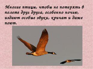Многие птицы, чтобы не потерять в полете друг друга, особенно ночью, издают