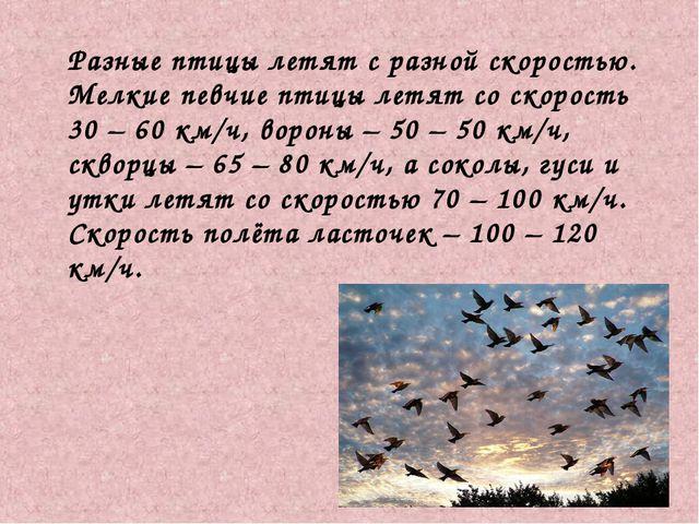 Разные птицы летят с разной скоростью. Мелкие певчие птицы летят со скорость...