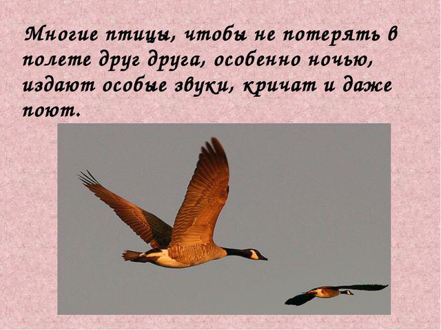 Многие птицы, чтобы не потерять в полете друг друга, особенно ночью, издают...
