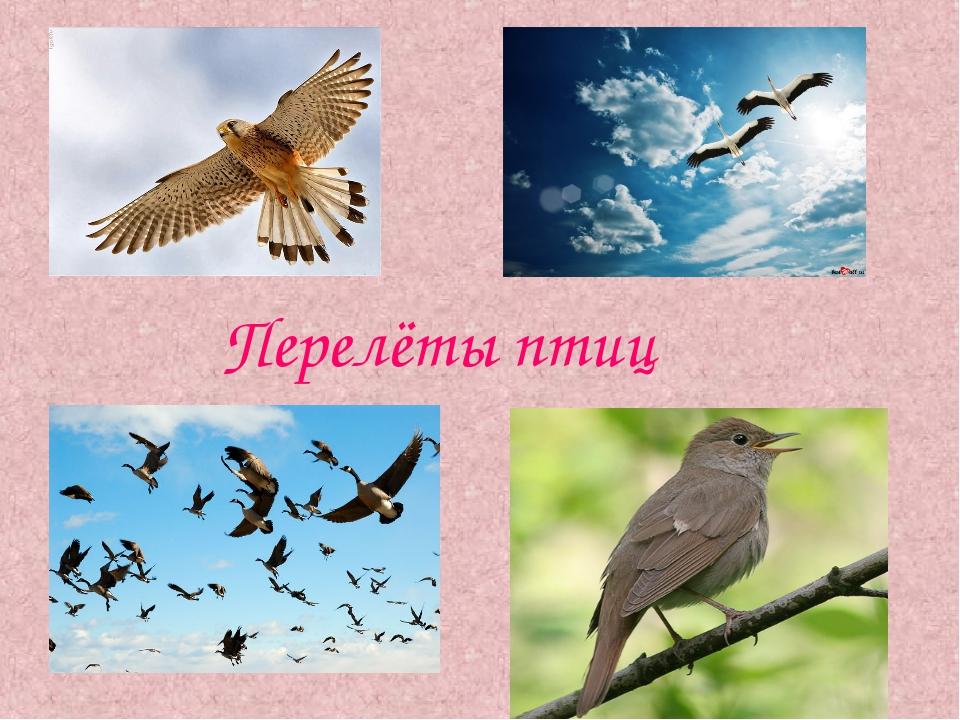 Перелёты птиц