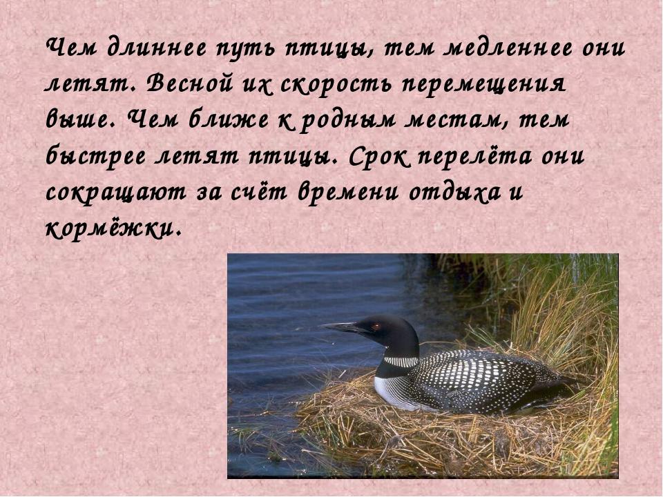 Чем длиннее путь птицы, тем медленнее они летят. Весной их скорость перемеще...