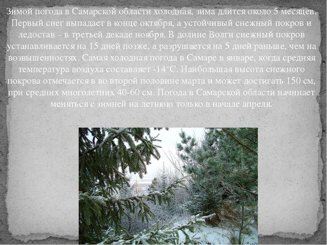 Зимой погода в Самарской области холодная, зима длится около 5 месяцев. Перв...