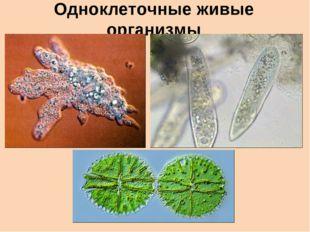 Одноклеточные живые организмы
