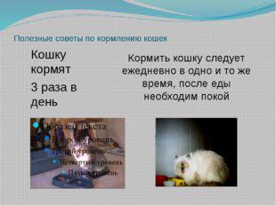 Полезные советы по кормлению кошек Кормить кошку следует ежедневно в одно и т