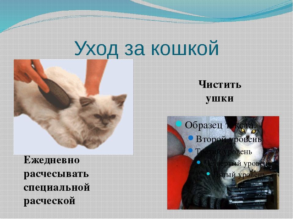 Уход за кошкой Чистить ушки Ежедневно расчесывать специальной расческой