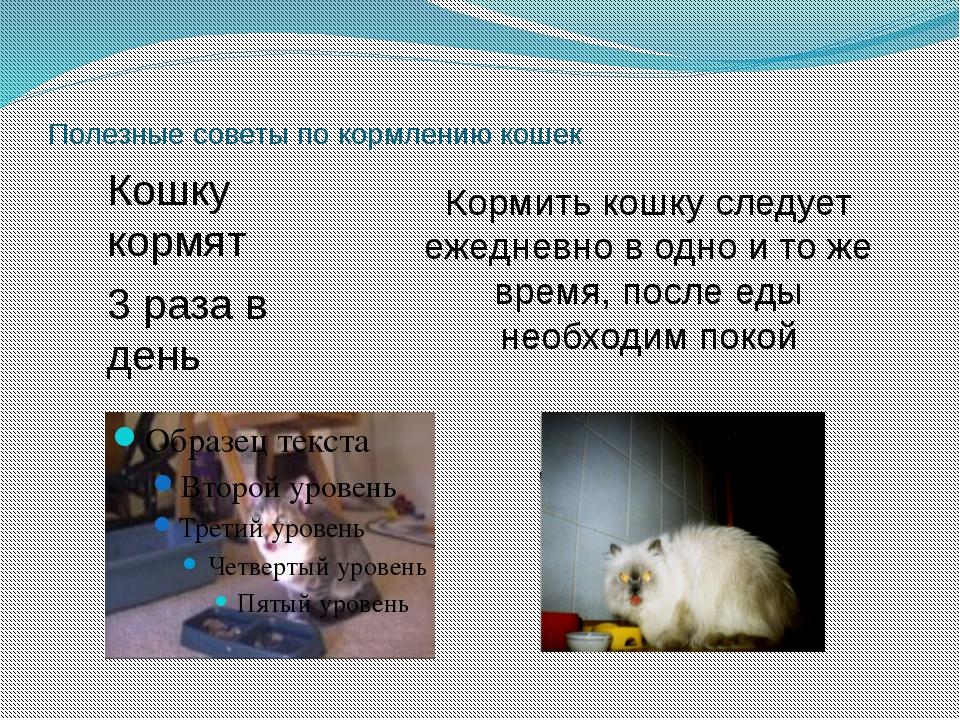 Полезные советы по кормлению кошек Кормить кошку следует ежедневно в одно и т...