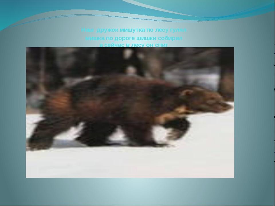 Наш дружок мишутка по лесу гулял мишка по дороге шишки собирал а сейчас в лес...