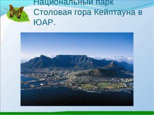 Национальный парк Столовая гора Кейптауна в ЮАР.