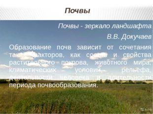 Почвы Почвы - зеркало ландшафта В.В. Докучаев Образование почв зависит от соч