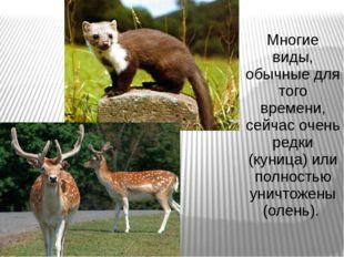 Многие виды, обычные для того времени, сейчас очень редки (куница) или полнос