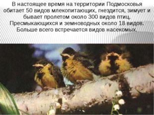 В настоящее время на территории Подмосковья обитает 50 видов млекопитающих, г
