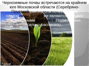 Черноземные почвы встречаются на крайнем юге Московской области (Серебряно- П
