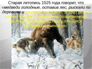 Старая летопись 1525 года говорит, что «медведи голодные, оставив лес, рыскал