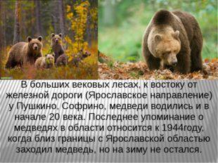 В больших вековых лесах, к востоку от железной дороги (Ярославское направлени