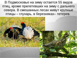 В Подмосковье на зиму остается 55 видов птиц, кроме прилетевших на зиму с дал