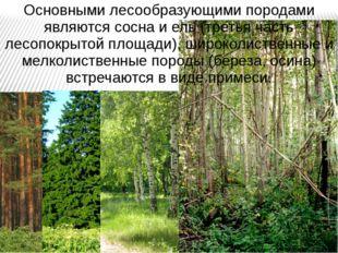 Основными лесообразующими породами являются сосна и ель (третья часть лесопок