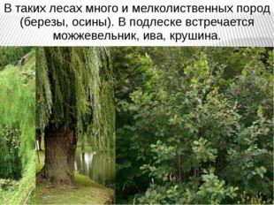 В таких лесах много и мелколиственных пород (березы, осины). В подлеске встре
