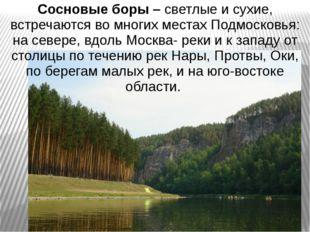 Сосновые боры – светлые и сухие, встречаются во многих местах Подмосковья: на