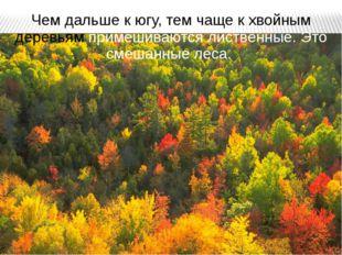 Чем дальше к югу, тем чаще к хвойным деревьям примешиваются лиственные. Это с