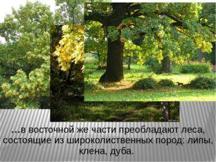 …в восточной же части преобладают леса, состоящие из широколиственных пород: