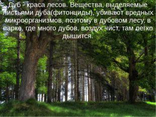 Дуб - краса лесов. Вещества, выделяемые листьями дуба(фитонциды), убивают вре