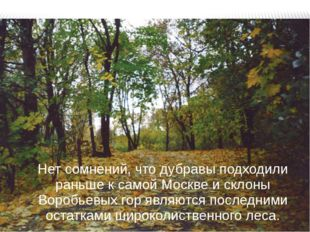 Нет сомнений, что дубравы подходили раньше к самой Москве и склоны Воробьевых