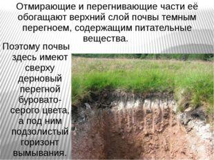 Отмирающие и перегнивающие части её обогащают верхний слой почвы темным перег