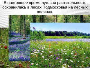 В настоящее время луговая растительность сохранилась в лесах Подмосковья на л