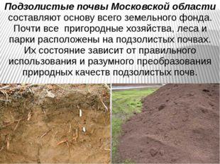 Подзолистые почвы Московской области составляют основу всего земельного фонда