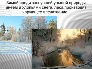 Зимой среди заснувшей унылой природы инеем и хлопьями снега, леса производят