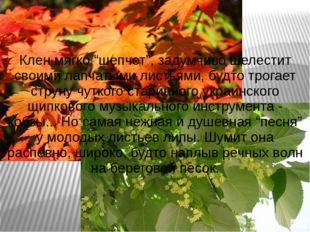 """Клен мягко """"шепчет"""", задумчиво шелестит своими лапчатыми листьями, будто трог"""