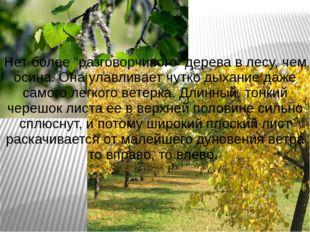 """Нет более """"разговорчивого"""" дерева в лесу, чем осина. Она улавливает чутко дых"""